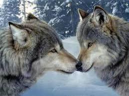 Sự tích con sói đền ơn