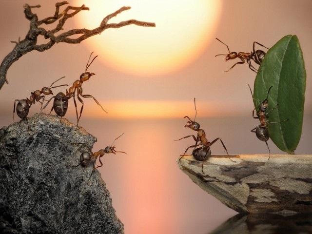 Sự tích con kiến Dương