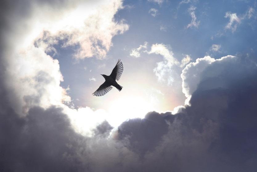 Sự tích chim gò sóng
