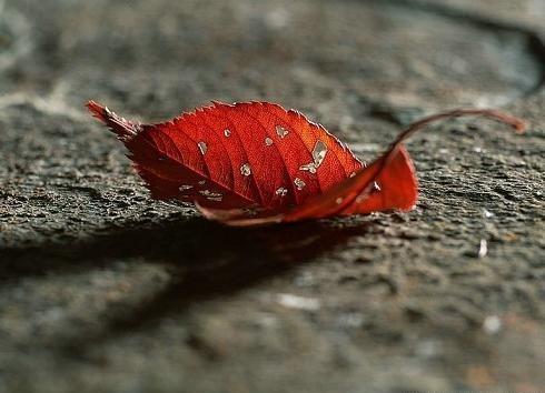Một mảnh lá của trời