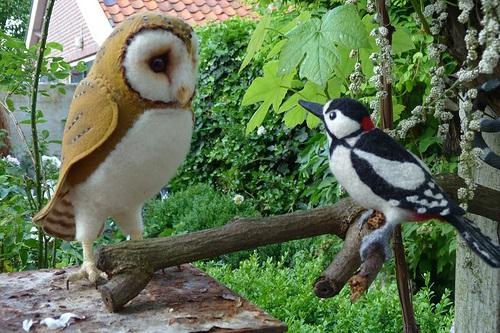 Cú và chim Gáy