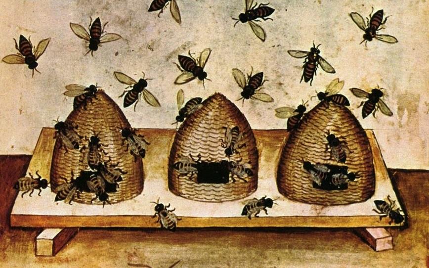 Ong mật và ong đực