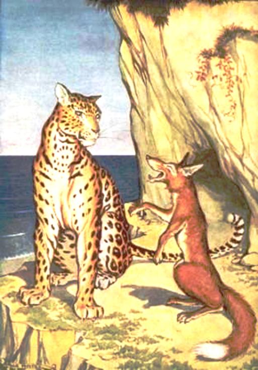 Con cáo và con báo