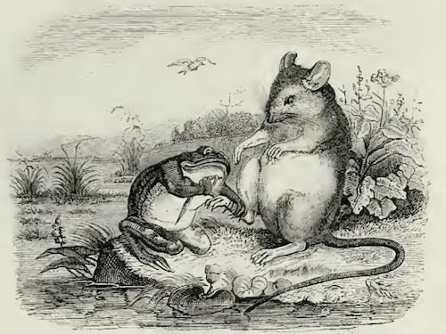Chuột và ếch