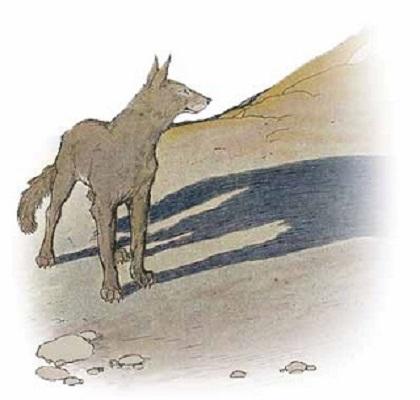 Con cáo và cái bóng