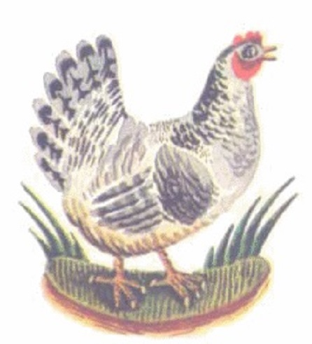Mụ đàn bà và con gà mái