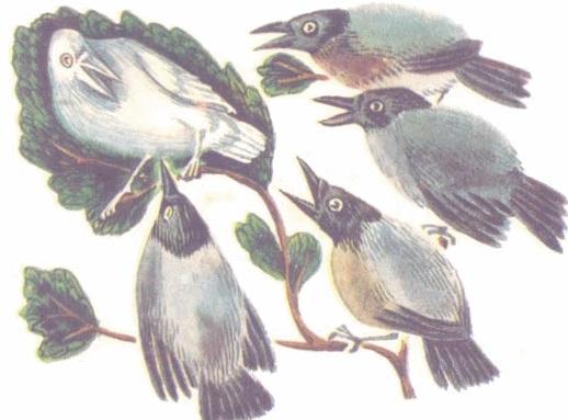 Quạ và đàn chim bồ câu