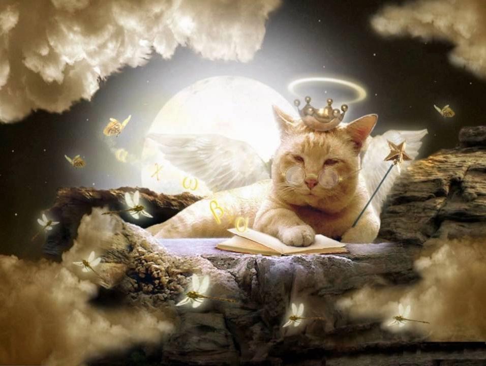 Thiên đàng của mèo