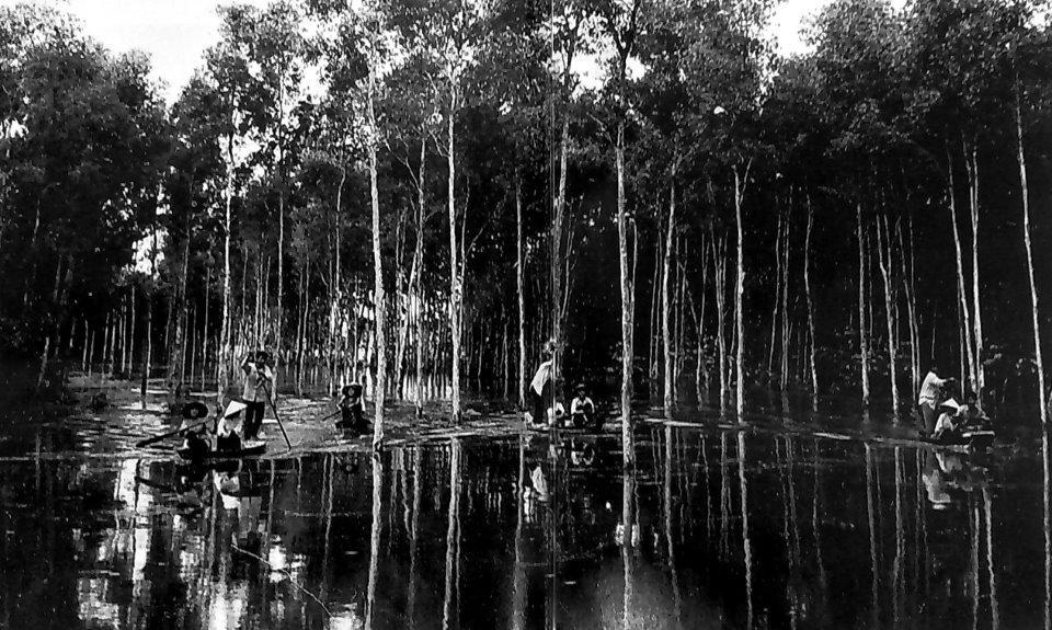 Người khuất mặt ở rừng U Minh