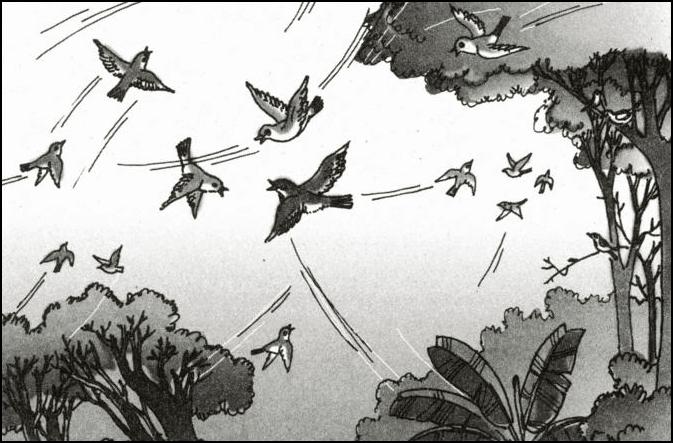 Chim chèo bẻo