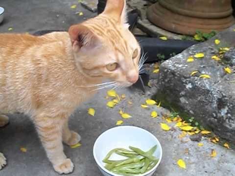 Con mèo của cống Quỳnh