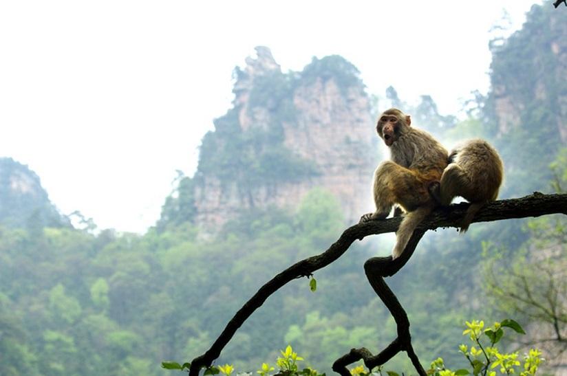 Đại vương và khỉ chúa