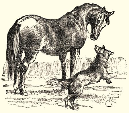 Cáo và ngựa