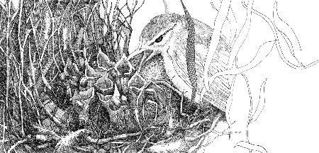 Chim hồng tước và con cú
