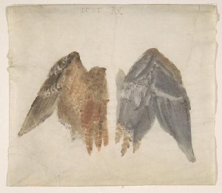 Con chim vạc và chim rẻ quạt