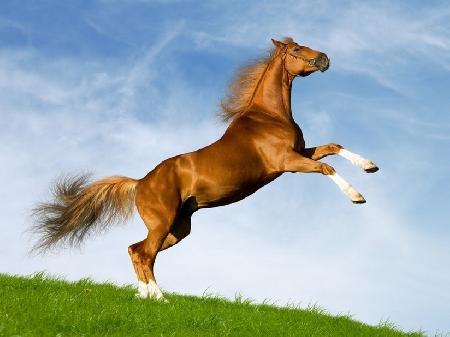 Con ngựa thần - Phần 3