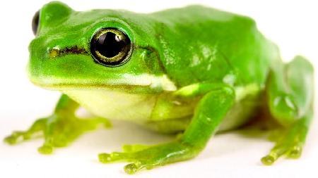 Người lấy ếch