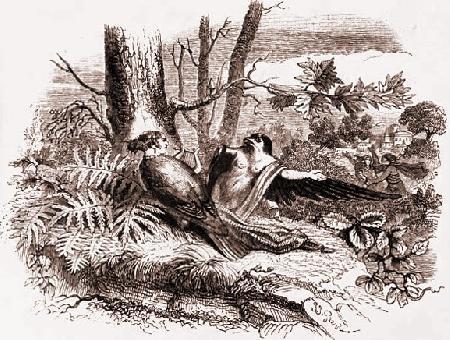 Chuyện hai chị em Procné và Philomèle biến thành chim