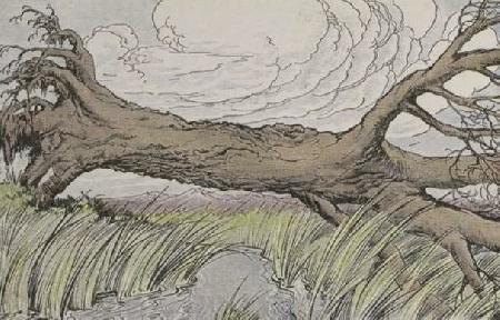 Cây sậy và cây ô liu