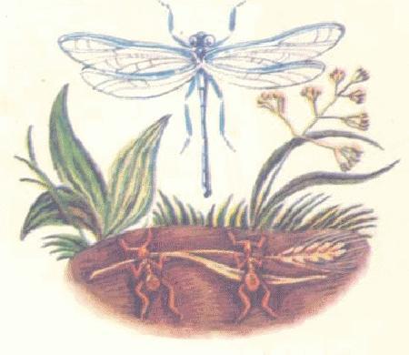 Chuồn chuồn và kiến