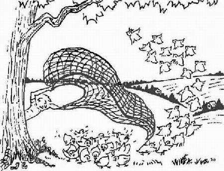 Chim cun cút và người thợ săn