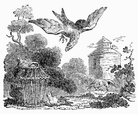Chim ưng, con diều và đàn bồ câu