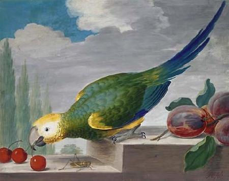 Vẹt và châu chấu