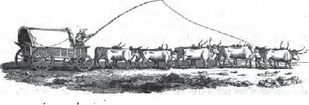 Đôi bò và cặp bánh xe