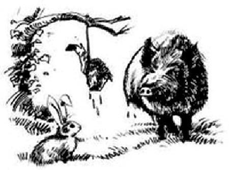 Heo rừng và Thỏ