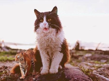 Hổ và Mèo