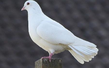 Áo lông trắng