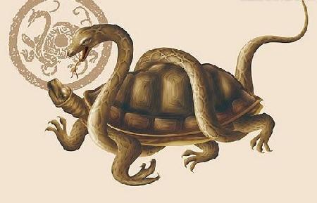 Rắn và Rùa