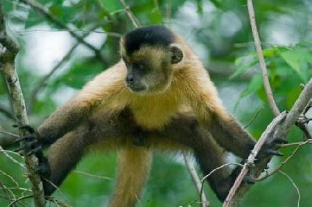 Con khỉ nhân từ