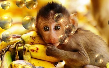 Dạy khỉ nói