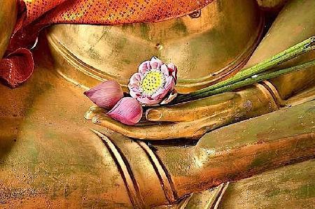 Hoa sen trong người