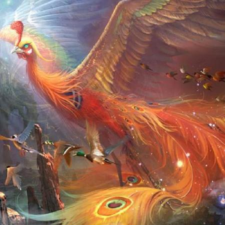 Chim Khổng Tước