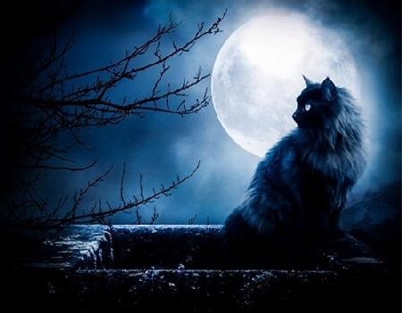 Linh Miêu - một loài mèo quỷ