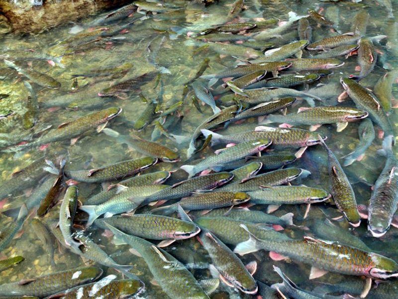 Truyền thuyết suối cá thần cẩm lương Thanh Hóa