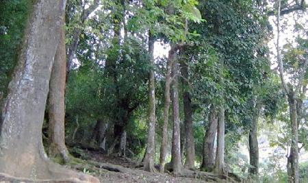 Mối tình ngang trái... giữa rừng thiêng Cư H'lăm